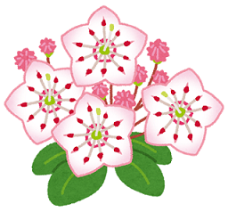 flower_kalmia_karumia-1